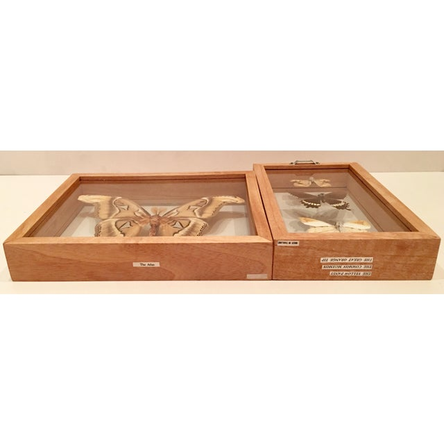 Shadow Box Framed Butterflies - A Pair - Image 7 of 7