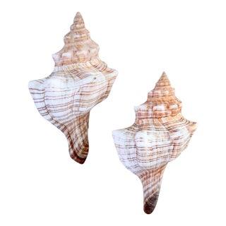 Vintage Natural Fox Shells - A Pair