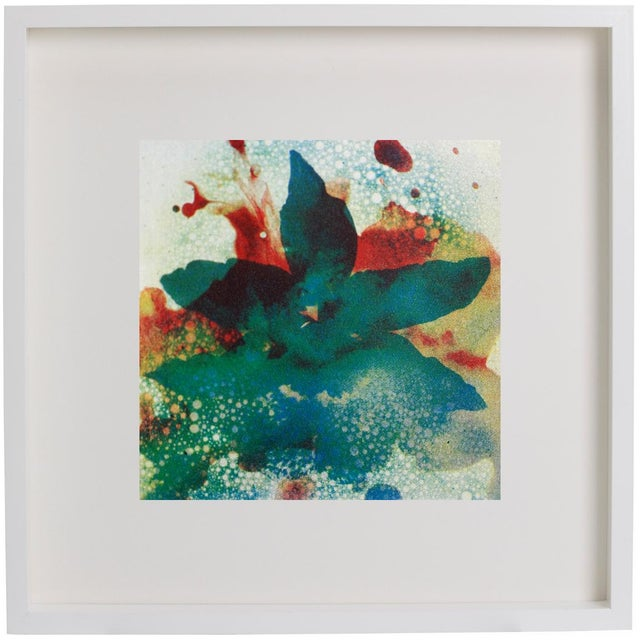 Image of Wet Orchid Screenprint