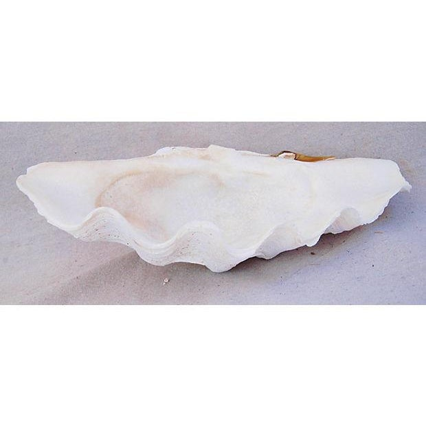 Large Natural Saltwater Clamshell - Image 3 of 7