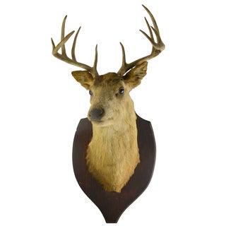 Vintage Whitetail Deer Mount