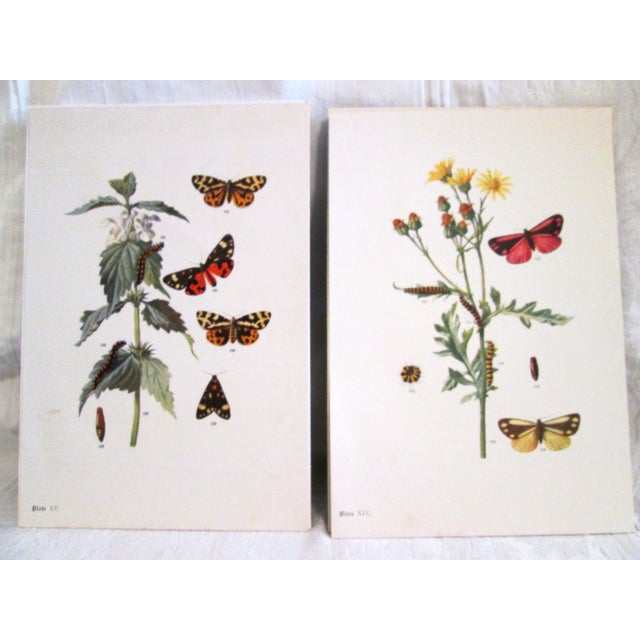1903 Butterfly & Botanical Prints - Pair - Image 2 of 8