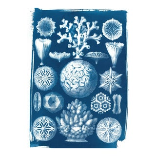 Limited Edition, Geometric Coral Drawing by Ernst Haeckel, Cyanotype Print on Watercolor Paper