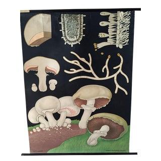 1973 Jung-Koch-Quentell Mushroom School Wall Chart