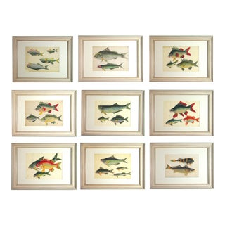 Chinese Watercolours of Fish on Pith Paper - Set of 9