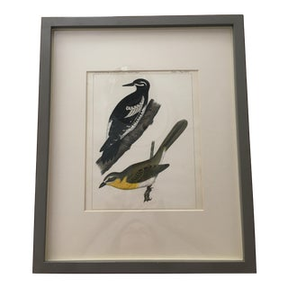 Vintage Mid-Century Bird Print