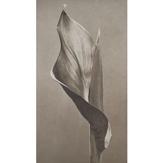 Eric Axene Platinum Print - At Seward's Feet