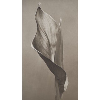 Eric Axene Platinum Print - At Seward's Feet