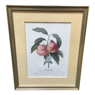Framed Limited Edition Print of Peaches