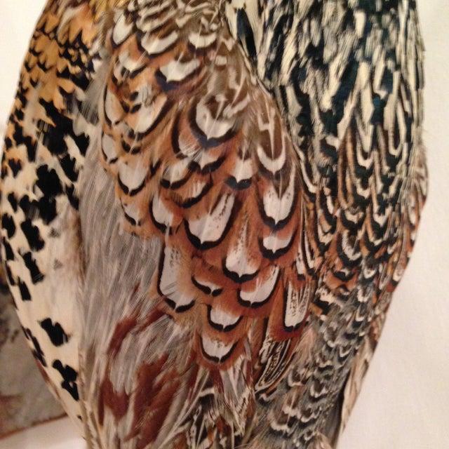 Stuffed Pheasant Mounted on Driftwood - Image 5 of 6