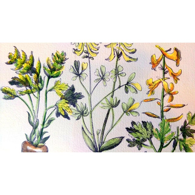 Botanical Print by Emanuel Sweert - Image 3 of 6