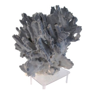 Natural Blue Ridge Coral on Stand