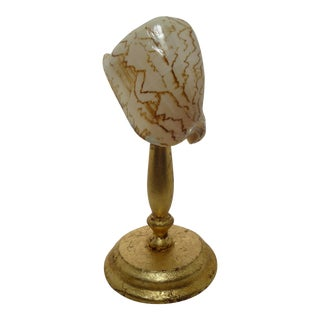 Sea Shell Specimen On Gilt Florentine Pedestal