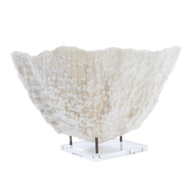 LARGE BOWL-SHAPED CORAL SPECIMEN ON STAND - Image 4 of 11