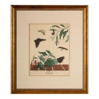 1785 Moses Harris Magpie Moth Print