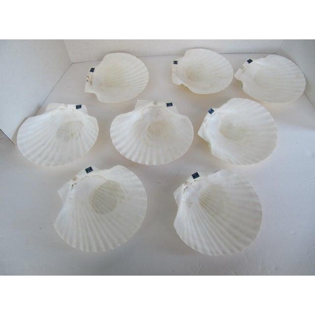 Natural Sea Shells - Set of 8 - Image 5 of 6