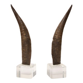 Antelope Horns Mounted on Lucite - A Pair