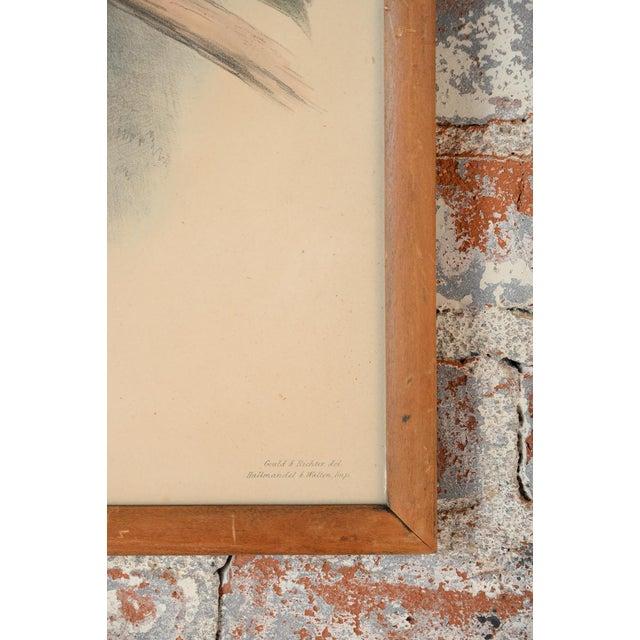 "John Gould ""Ramphatos Inca-Toucan"" Bird Litho. - Image 6 of 9"