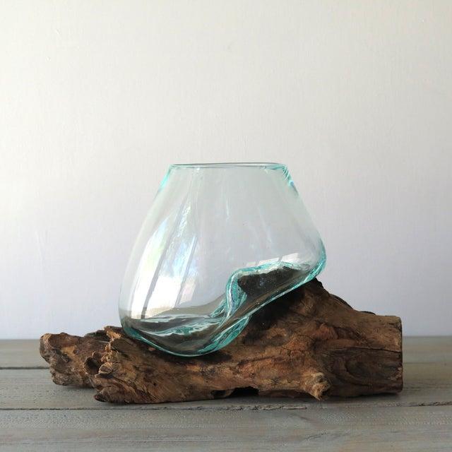 Glass on Teak Driftwood Terrarium - Image 2 of 7