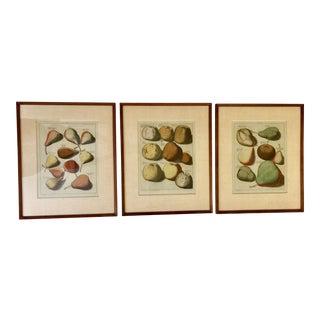 JH Knoop Apple & Pear Engravings - Set of 3