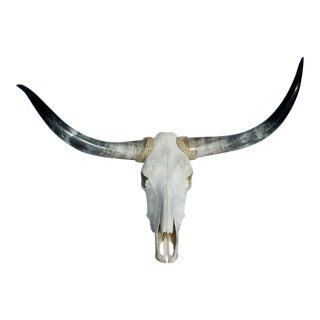 Texas Longhorns & Skull