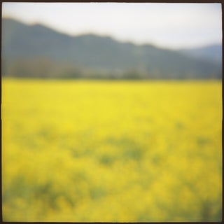 """Mustard"" Photography"