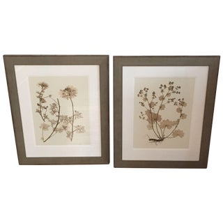 Framed Botanical Pressings - A Pair