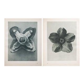 Karl Blossfeldt Two-Sided Black & White Photogravure N63-64