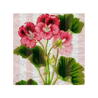 Antique Pink Pansies Archival Print