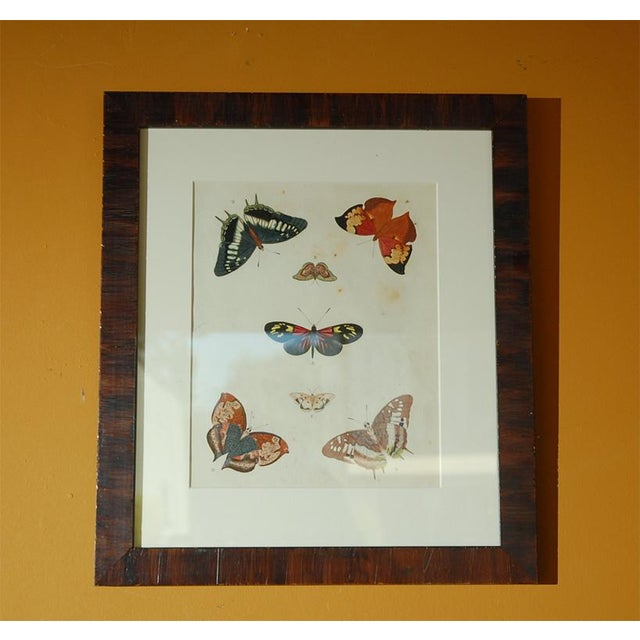 Antique Butterfly Prints Set of Eight - Image 5 of 10