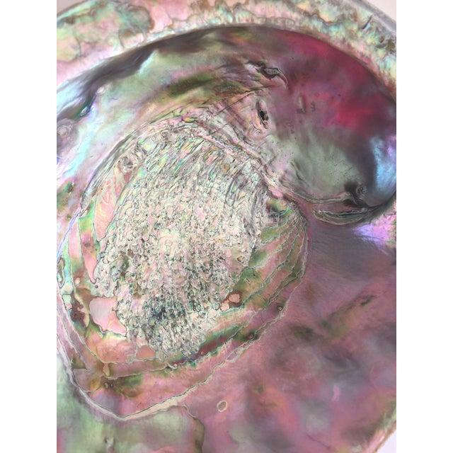 Image of Natural Abalone Shell Bowl