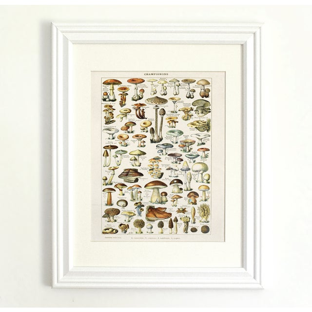 Image of Adolphe Millot Illustrated Mushrooms Canvas Poster