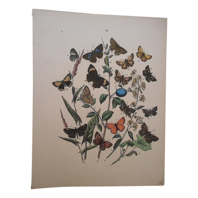 Antique Butterflies/Moths Lithograph Print - Image 4 of 4