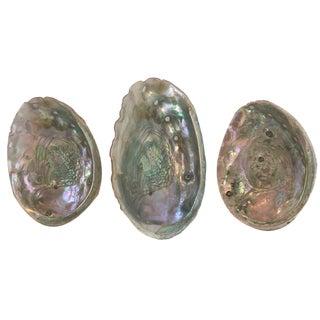 Vintage Abalone Shells - Set of 3