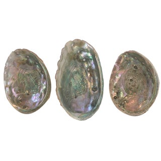 Vintage Abalone Shells - Set of 3