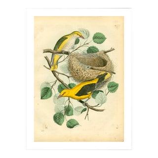 Antique Birds & Nest Archival Print