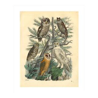 Antique '5 Owls' Archival Print