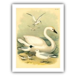 Antique 'Swan' Archival Print