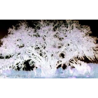 Wise Oak Tree I [Limited Edition 4/10]