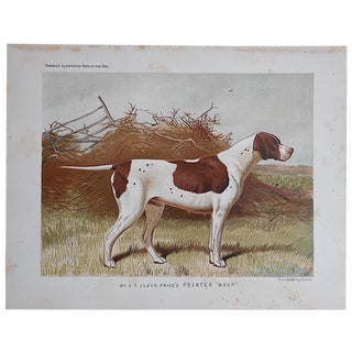 "Antique Dog Lithograph ""Pointer"""