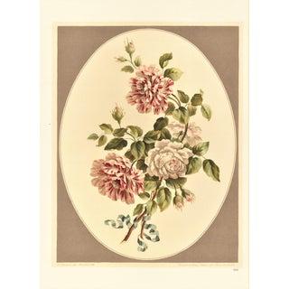 Botanical Lithograph -Roses
