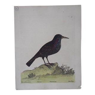 E. Albin18th Century Bird Engraving