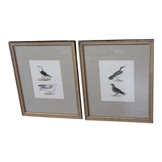 "Vintage ""Birds of New York"" Engravings - A Pair"