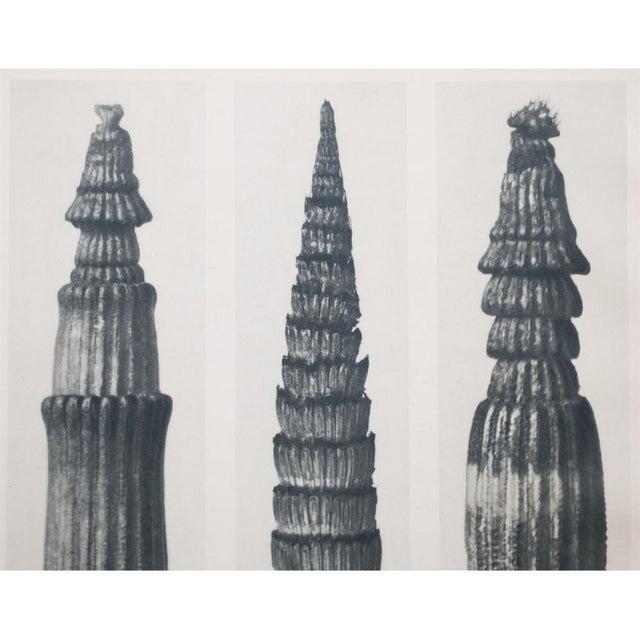 Karl Blossfeldt Two Sided Photogravure N1-2 - Image 6 of 9