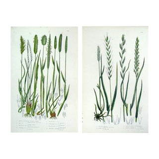 Botanical Grasses Lithograph - Set of 2, 1860