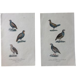 French Hand-Painted Partridge Engravings - A Pair