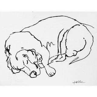 Beagle Sleep Drawing