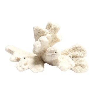 Large white coral specimen