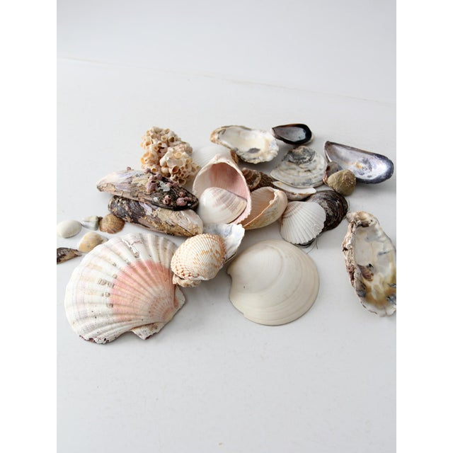 Vintage Sea Shell Collection - Set of 25 - Image 5 of 6