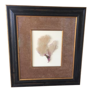 Gold Accent Large Framed Sea Fan